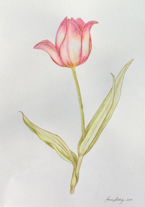 Painting PinkTulip