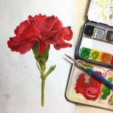 Carnation Watercolour Challenge by Tania Scrapbook House